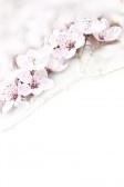 enkele inschrijving roze pastel bloei met ruimte voor tekst  stock photography