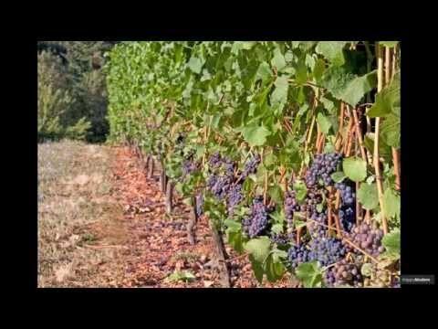 Руководство по созданию шпалеры для винограда своими руками (47 фото) - HappyModern
