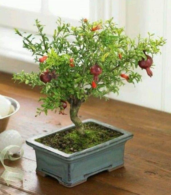 71 best Indoor Garden images on Pinterest | Gardening, Plants and ...
