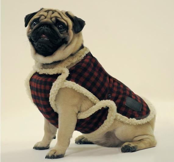 Las prendas para perros suelen ser muy costosas, ¿te atreves a hacerlas tú mismo?
