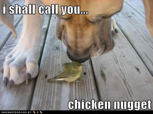 Chicken Nugget Quotes: 17+ Best Images About Fuzz/Furr Dog Ed... On Pinterest