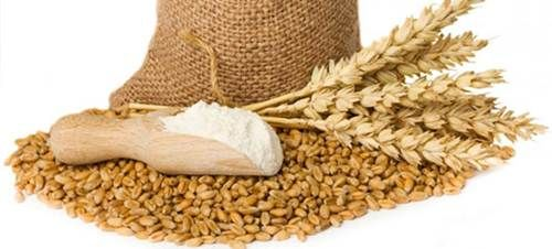 Cara Menanam Gandum Yang Baik - http://caramenanam.net/cara-menanam-gandum/