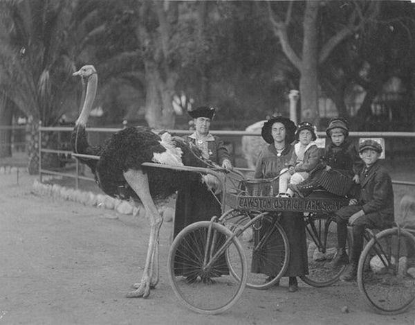 Fotos antigas pra lá de esquisitas | O Buteco da Net