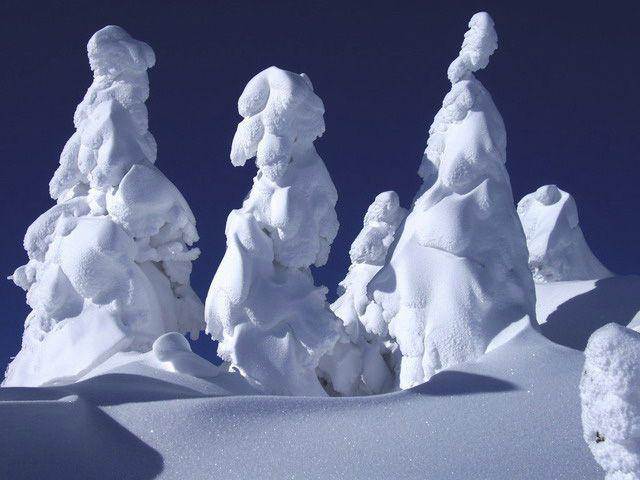 Snow Monsters of Japan