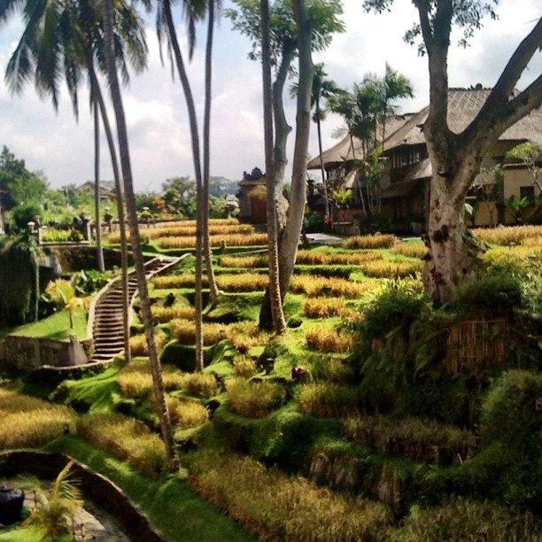 Lost paradise #iphonesia #indonesia #tourism #travel #bali #paddyfield #nature #resort #tranquil #popular #igers #ig #kamandalu #instagramhub #instamood #hotelhunt - @ruebz- #webstagram