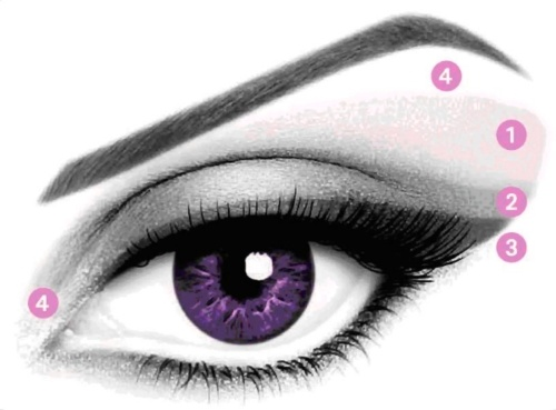 Anatomy of the Eye Makeup Version. 1) LIGHTEST SHADE - Apply as a base on the entire eyelid including the brow bone but avoid going all the way to the eyebrow.     2) MEDIUM SHADE - Sweep over the middle of the eyelid and blur it toward the outer edge of the eye.   3) DARKEST SHADE - Apply along the base of the lashes with a beveled precision applicator.   4) HIGHLIGHTER / ILLUMINATOR SHADE - Apply to the inner corner of the eye and below the eyebrow for a finishing touch. beauty