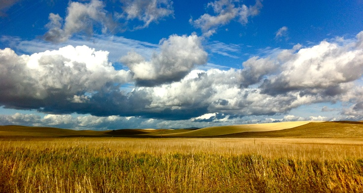 Moscow, Idaho in the summer...wheat fields and sky...by Jan Perley | My photos | Pinterest | Wheat fields, Idaho and Moscow