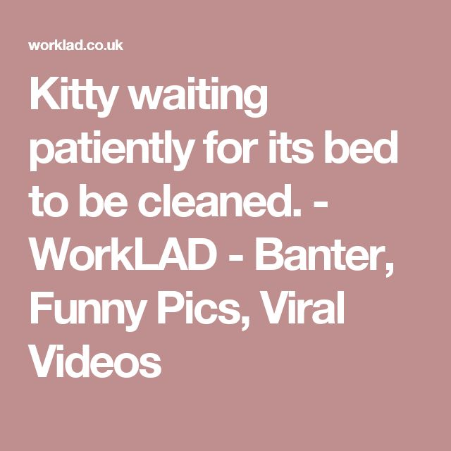 Kitty waiting patiently for its bed to be cleaned. - WorkLAD - Banter, Funny Pics, Viral Videos
