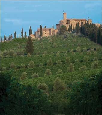Castello Banfi is a family-owned vineyard estate and winery in the Brunello region of Tuscany.