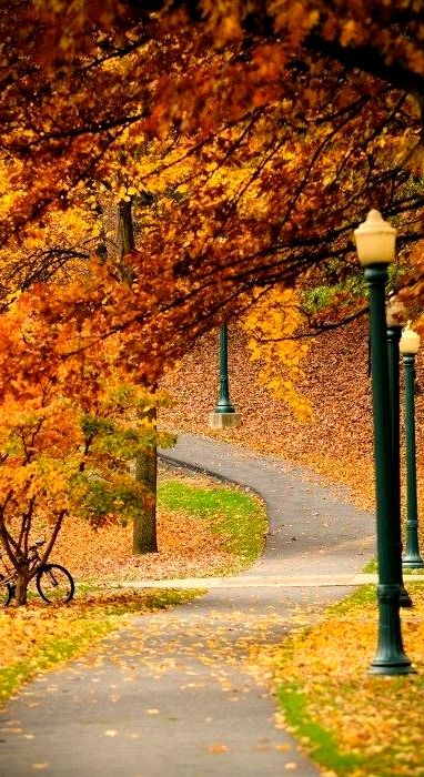 a beautiful fall path....