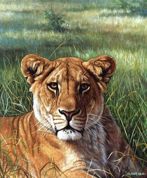 Lioness by Gabriel Hermida on ARTwanted в 2020 г ...
