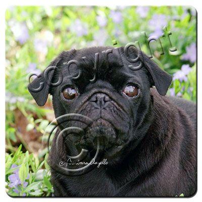 Pug black coaster