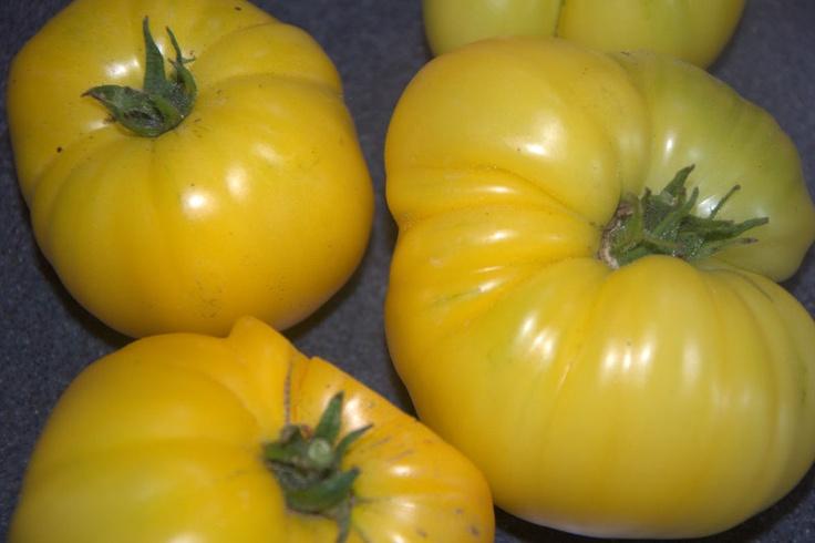 Azoychka yellow heirloom tomato | Things we are growing ...