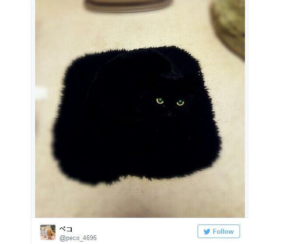 Ninja+cats+blend+into+their+surroundings+in+photos+on+Japanese+Twitter+【Pics】