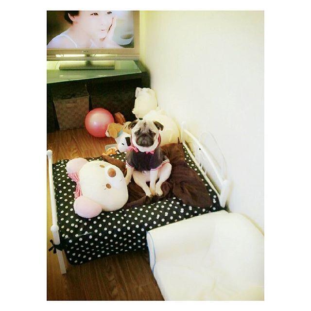 #Mrppong #momo #pug #couple #dog #パグ #愛犬 #ワンちゃん #ミスターポン #モモ #짬뽕과모모 #퍼그 #강아지 #멍멍이 #반려견 #견스타그램 #개스타그램 #멍스타일 #강사모