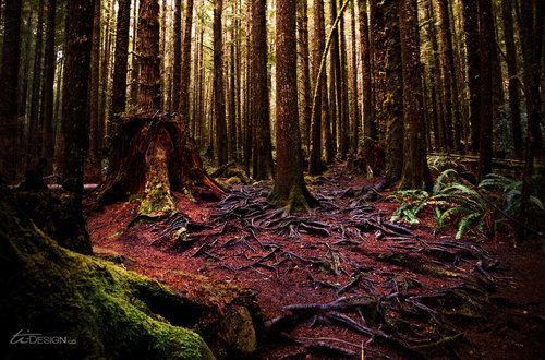 Enchanted Forest, Vancouver Island, Canada SO beautiful there.. It is a whimsical forest. I swear fairies live there. :)