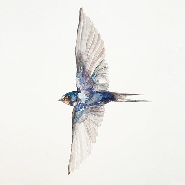 Free • #freedom #swallow #free #freespirit #illustration #illustrator #illustratorsoninstagram #illustrationartist #painting #watercolour #animalillustration #swallowtattoo #nature #art #illustrationoftheday #painter #artist #childrensbooks #editorialillustration #animalkingdom  #ireland #irishwildlife #irishartist #lovedublin #sketch #summer #wildlife #wildatheart #louisenaughton #ohdeer