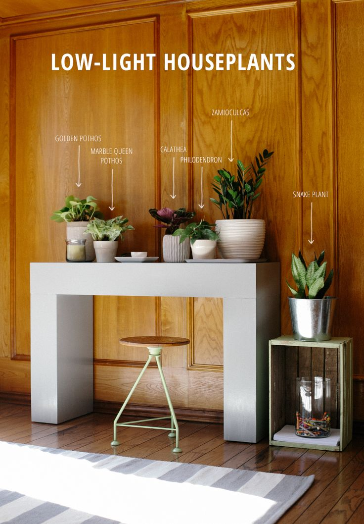 Six easy-to-maintain houseplants that do well in low-light rooms. I've just added these to my dark, wood paneled office.