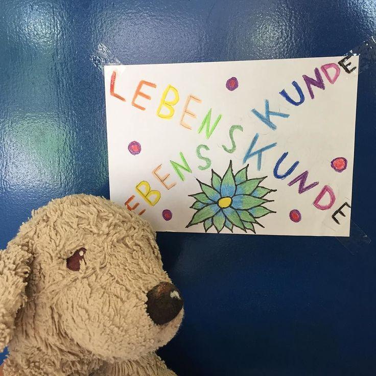 Heute bin ich mal wieder auf Besuch an der Grundschule am Tempelhofer Feld im im Fach LEBENSKUNDE über meine Besuche in den Flüchtlingslagern im Libanon zu erzählen... School visit in Berlin . . #lebenskunde #berlinstyle #dogsofberlin #lovelaughlobilat