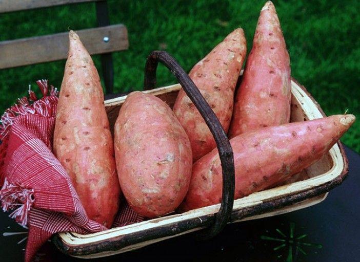 Cultiver les patates douces