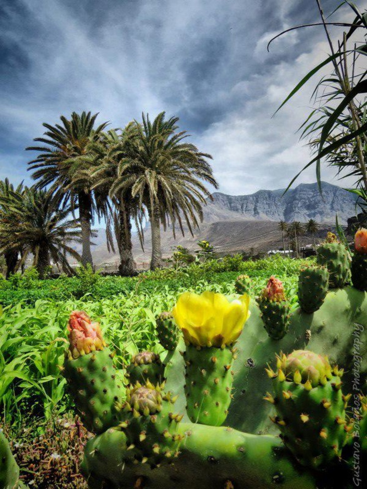 Agaete, Gran Canaria, Spain http://www.travelandtransitions.com/destinations/destination-advice/europe/outdoor-adventure-gran-canaria/