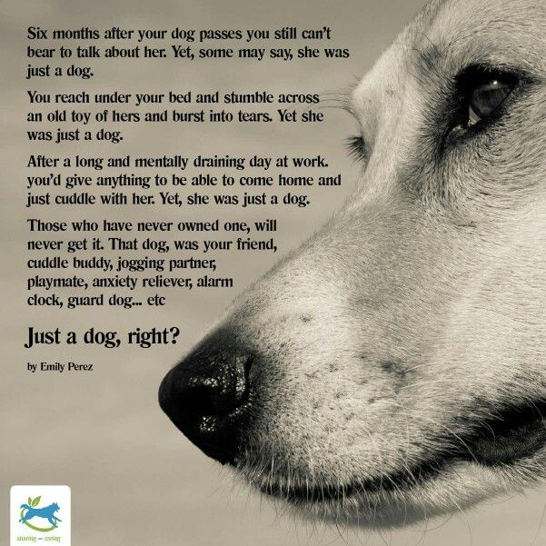 15 best images about Dog Bereavement and Sympathy on Pinterest ...