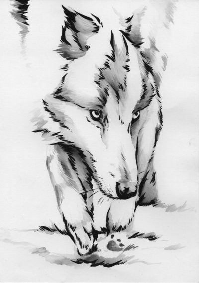 Watercolor Wolf Tattoo. Definetly getting something like thisnwhen inget older