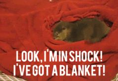 shock blankie (click for gif)