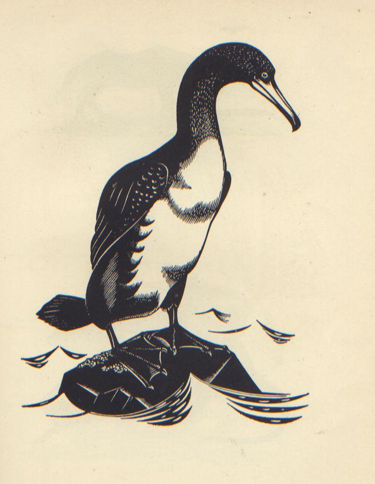 Cormorant - wood engraving 1937 - Robert John Gibbings (1889-1958, Eire)