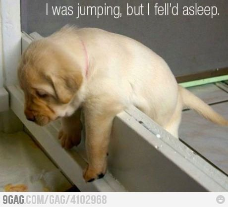 Dogs Pics, Funny Dogs, Little Puppies, Funny Pictures, Sleepy Puppies, Dogs Photos, Funny Puppies, Labs Puppies, Animal