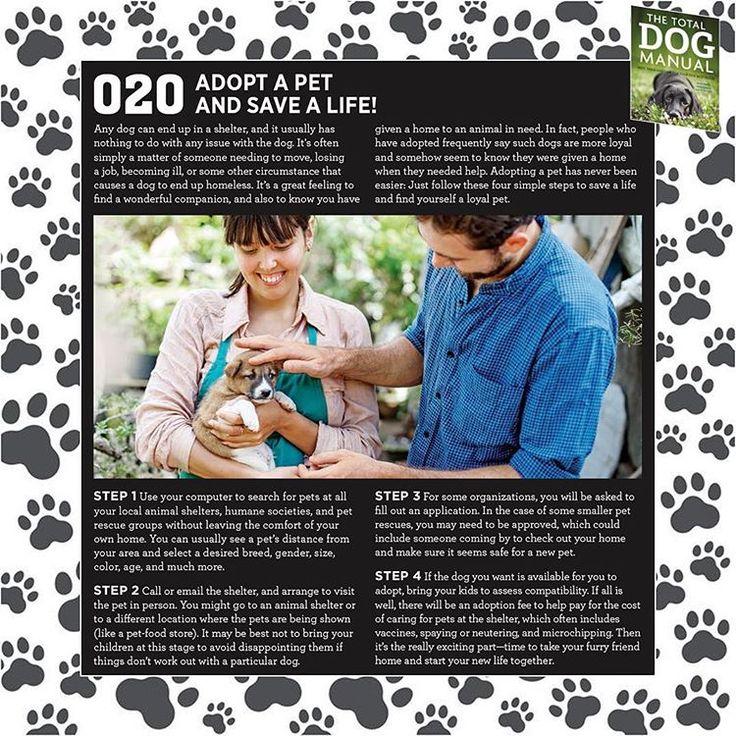 The Total Dog Manual 'Basics' chapter - 020: Adopt a pet and save a life! www.quillerpublishing.com #crufts2016 #crufts #crufts125 #thetotaldogmanual #totaldog #totaldogmanual #dogtraining #dogs #dog #dogsofinstagram #puppycare #puppytraining #puppy #adoptdontshop #adoptadog #adoptapet #adoptapetsavealife