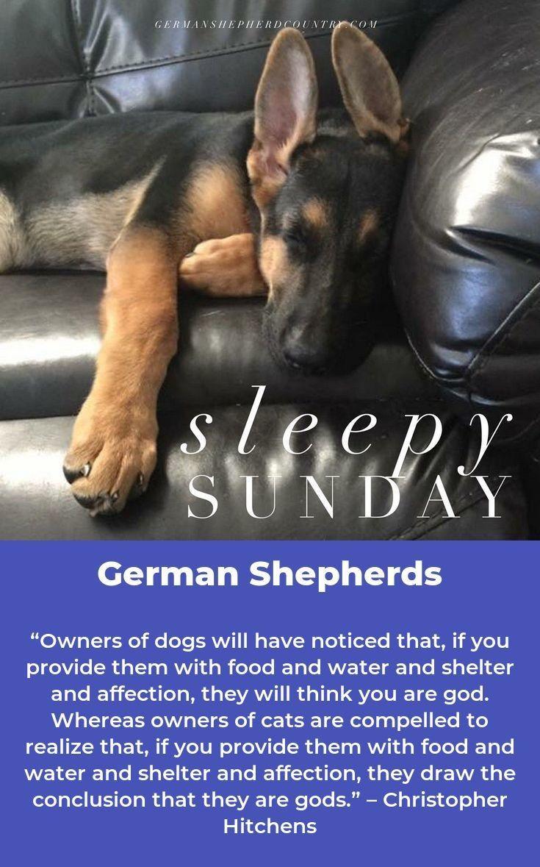 German Shepherd Pup Germanshepherddog Germanshepherdlife