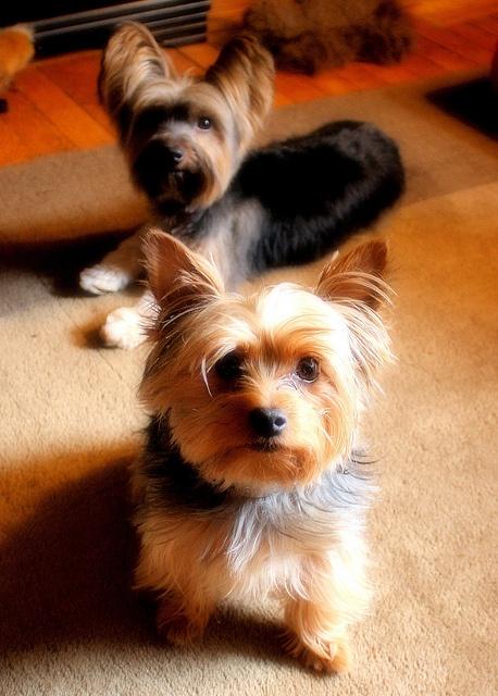 Barnaby & Oliver | Flickr: Intercambio de fotos