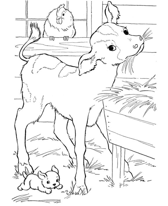 Free Calf Farm Animal Coloring Pages