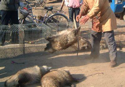 【拡散希望】2015年11月 毛皮反対チラシ配りIN川口 ボラさん大募集  差別のない動物社会へ