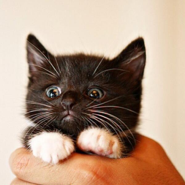 #CuteKitten #MeowMoe Help! This human is squeezing me! ... https://www.meowmoe.com/27271/