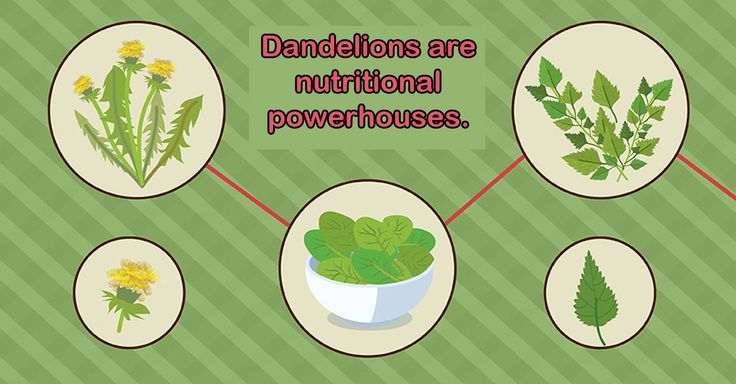 Dandelions pop up in yards and green spaces everywhere. But do you know the health benefits of the dandelion?