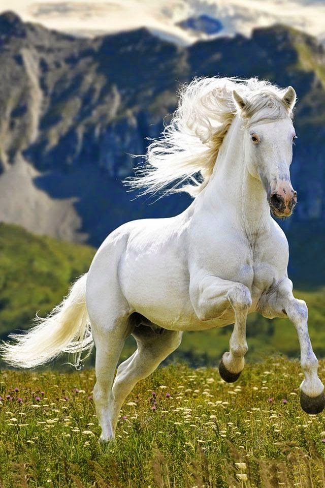 """I'm thinking of Shadowfax ''Lord of the Rings"""""""