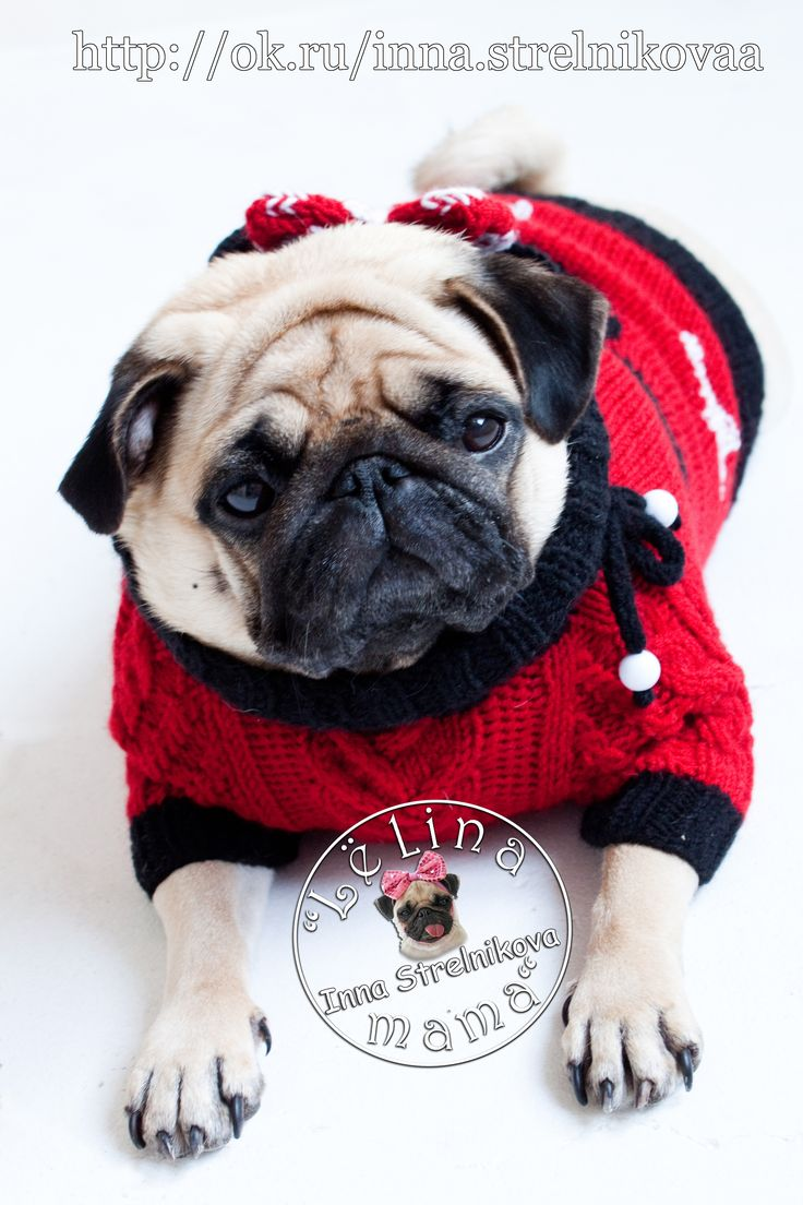 Моя Минни маус)) #MinnieMouse #Миннимаус #дисней #Disney  #араны #handmade #хендмейд #pug #pugs #carlino #mops #мопс #ручнаяработа #вязание #вязаниесобакам #назаказ #собаки #dog #вяжудлясобак #вязанаяодеждадлясобак #вязаниесобакам #одеждаживотным #одеждадлясобак #dogfashion #dog #crochet #crochetting #knitdogs #knitweardesign #livemaster #mysolutionforlife #dogsweater #instadog #dogsofinstagram #dogcoat #dogjumper #knit #wooll #knitted #craft #petclothes #pet #yarnaddict #yarn #wool