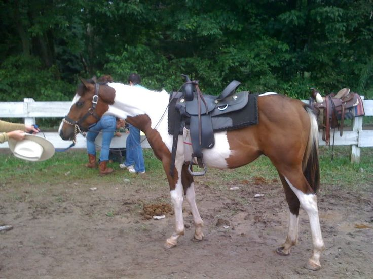 Cheap Horses For Sale Yearling Horses For SaleCheap
