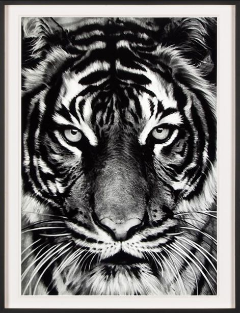 robert longo print untitled tiger art friends. Black Bedroom Furniture Sets. Home Design Ideas