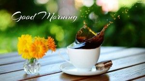 The most amazing collection of good morning images hd wallpapersis the best way to greet your best friendsa great morning. these amazing good morning images, pictures represent the beauty and freshness of the day with this good morning images collection.Sharethe best good morning images...
