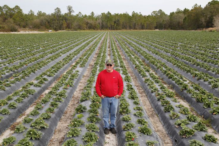 Innovation Drives Florida Agriculture  Some 2.2 million jobs are linked to agriculture in Florida.  http://www.tampabay.com/opinion/columns/column-innovation-drives-florida-agriculture/2306332