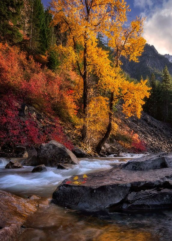 October's Embrace (Cascades, Washington) by Candace Dyar ...