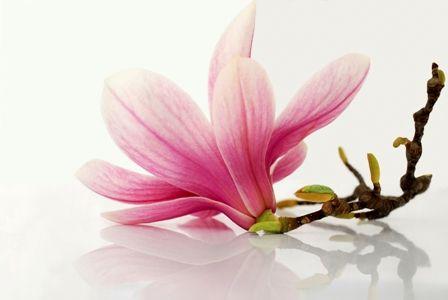 PHYT'S flower