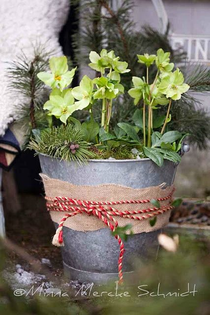 simple and festive. Add burlap and twine to my galvanized buckets. Use birch logs, red dogwood, and jelly jar votives