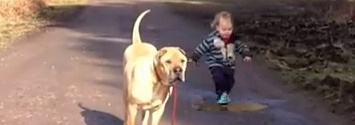 Patient Dog Waits While His Best Friend Plays In A Puddle