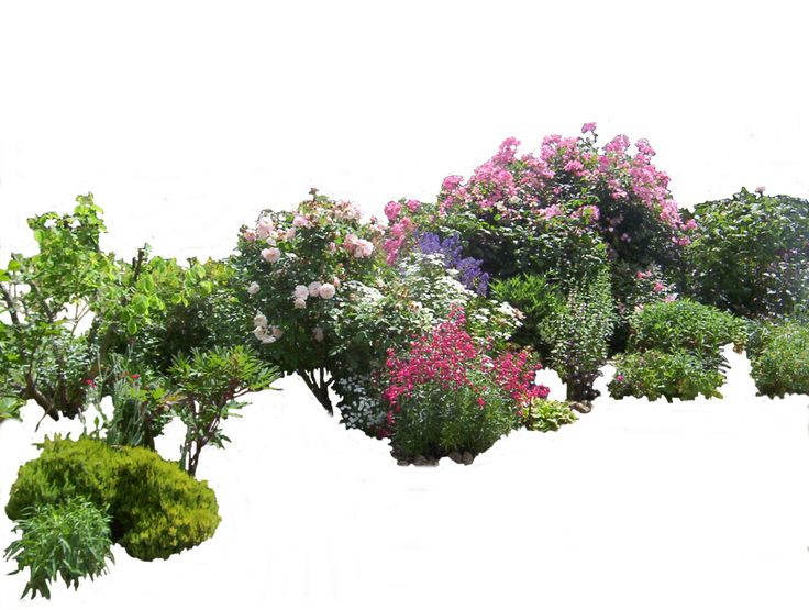 Flowered garden png 03 by *MontvalentStock on deviantART