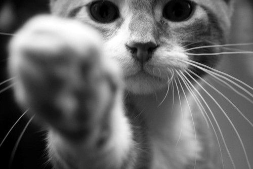 adorableFunny Kitty, Cat Paw, High Five, Animal Pictures, Kitty Cat, The Face, Kittens Mittens, Cute Cat, Kittycat