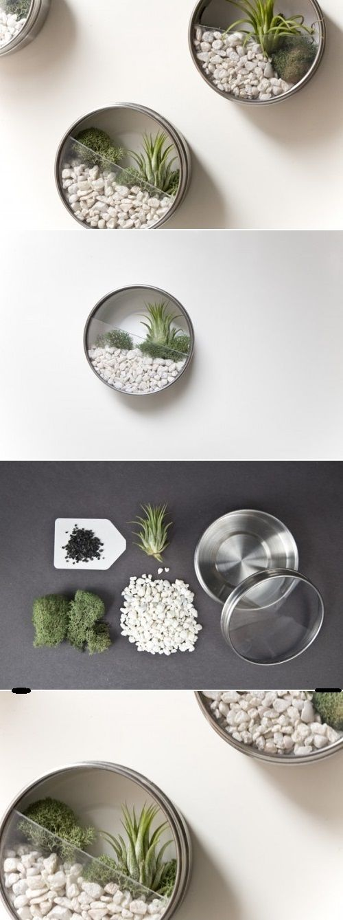 DIY Wall Terrariums